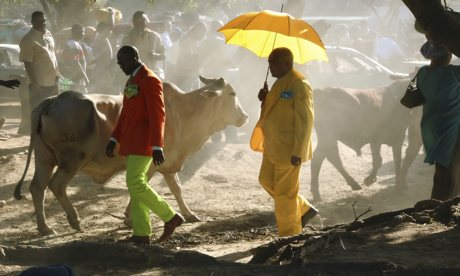 Guinness: Sapeurs in their finery walk among the cattle